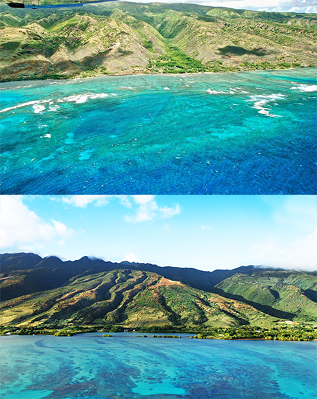 The Molokai Reef